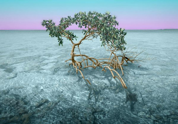 Money-Key-mangrove-1n-14×20