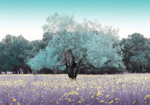 Myakka-in-Spring-14×20