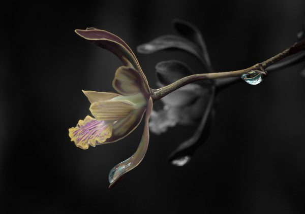butterfly-orchid-1-8×10