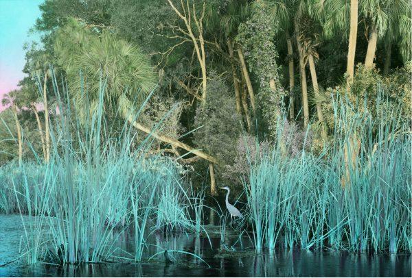 chasshowitzka river 13×20