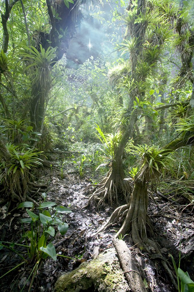 fakahatchee trail 1