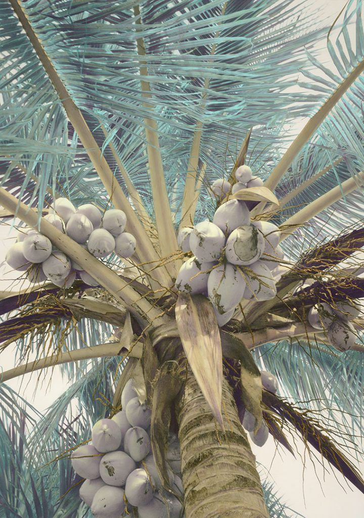 gone-coconuts-19×13