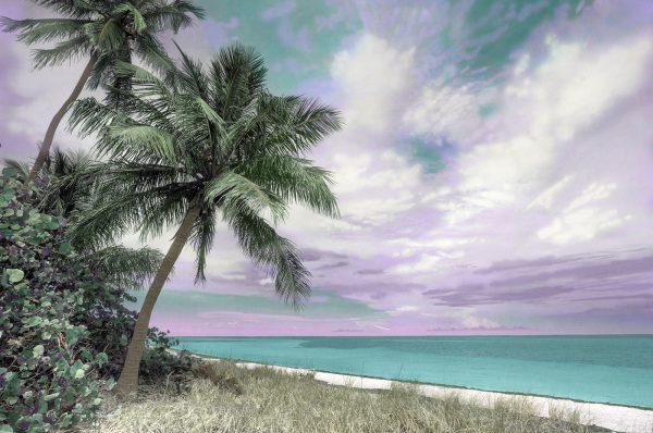 Bahia Honda Palms