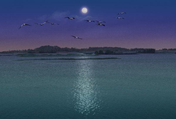 Woodstorks Moonlight Flight