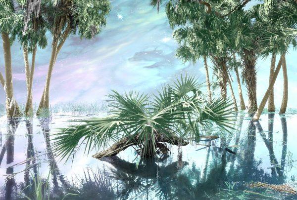 Daydreaming in Myakka